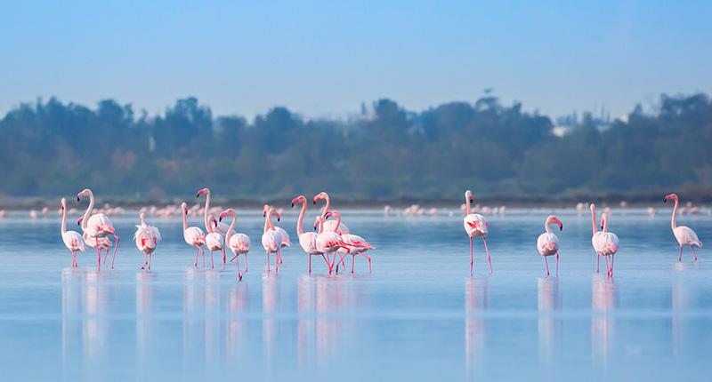 mooiste-ontdekkingen-cyprus-flamingos-eliza-was-here