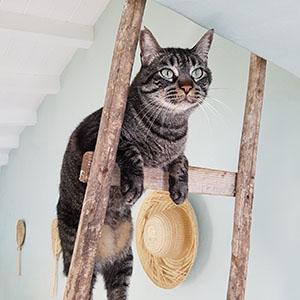 Gato Preto de Silves