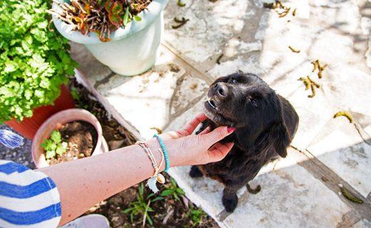 Vakantieadresjes voor dierenliefhebbers