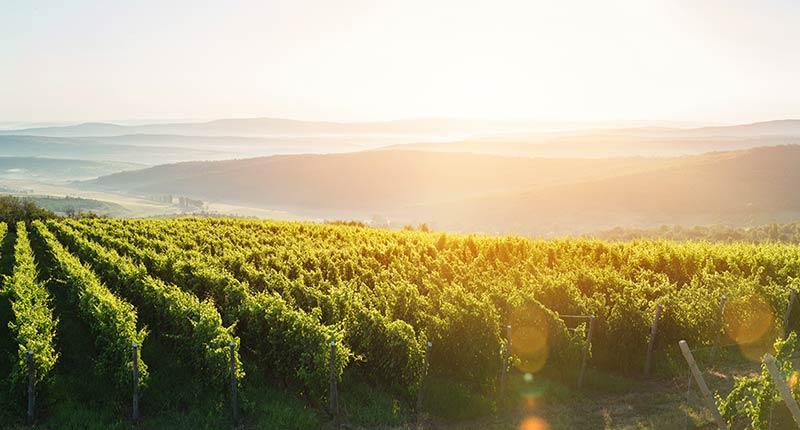 Vakantie bij een landgoed met wijngaard