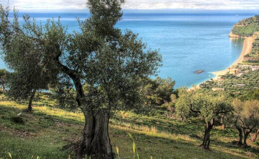 olijfolie-proeven-puglia-eliza-was-here