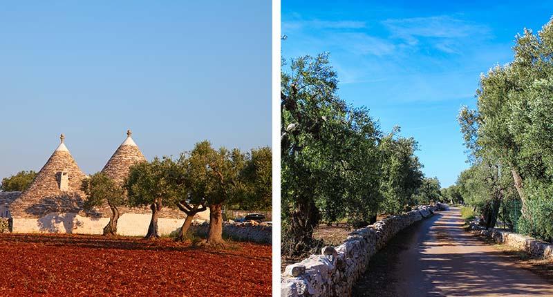 olijfolie-proeven-puglia-olijfbomen-eliza-was-here