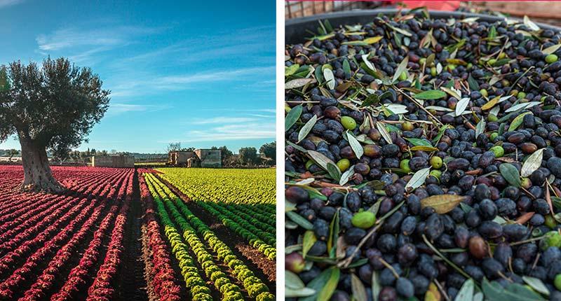 olijfolie-proeven-puglia-olijven-eliza-was-here