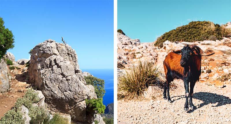 Natuurpark Serra de Tramuntana