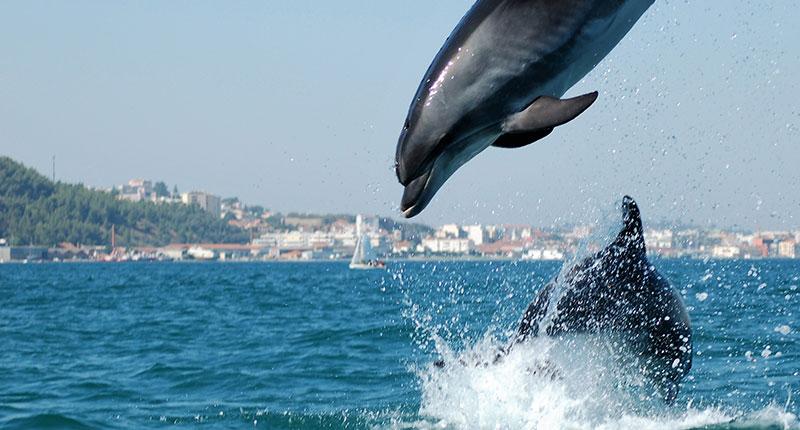bezienswaardigheden-te-doen-dolfijnen-alentejo-eliza-was-here
