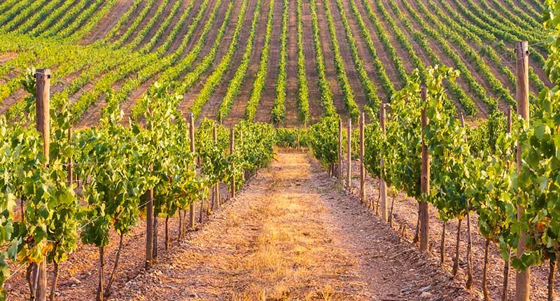 bezienswaardigheden-te-doen-wijngaarden-alentejo-eliza-was-here