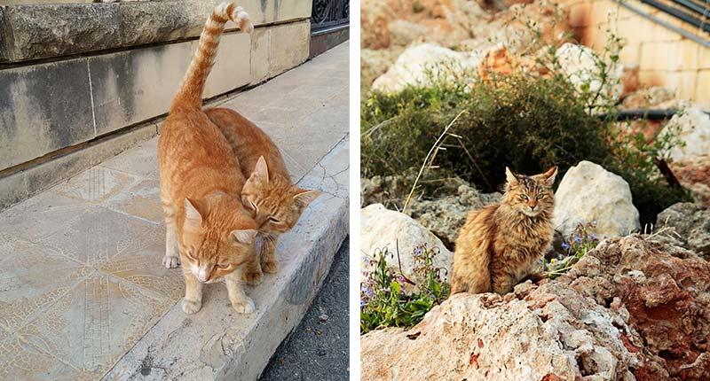 Bezienswaardigheden-vakantie-op-gozo-eliza-was-here-kattenfotograaf
