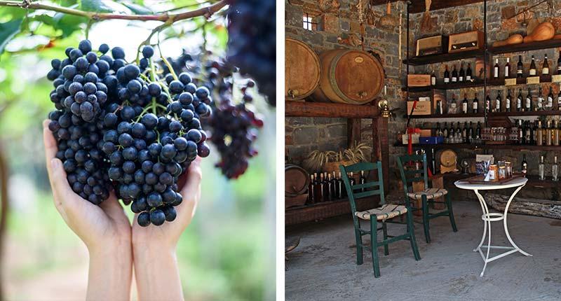 favoriete-uitstapjes-Lesbos-wijn-proeven-chidira-eliza-was-here