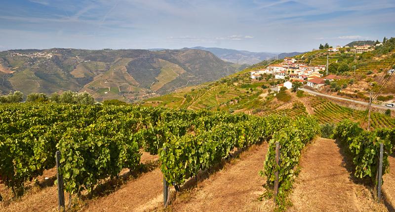 Dit zijn mijn favoriete wijnstreken in Portugal