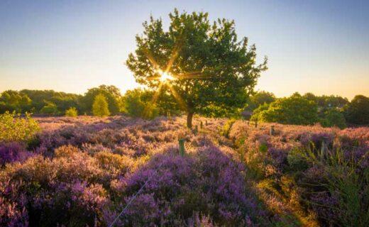 Landschap in Nederland