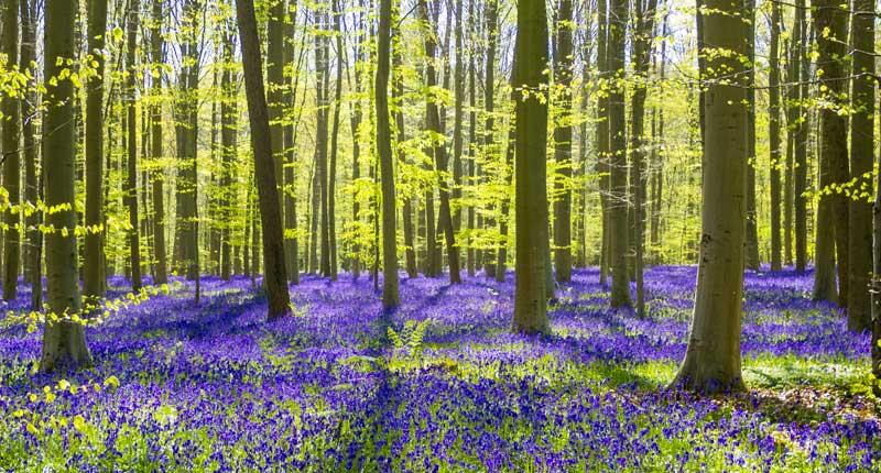Natuur in België